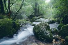 """Nature Of """"Yakushima"""""""