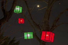 Paper Lanterns On A Trees As B...