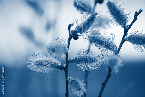 inflorescences-of-flowers-on-a-blurred-background-classic-blue-color-the-year-2020-space-for-text