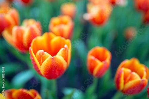 Naklejki na meble Piękny kwiat w ogrodzie