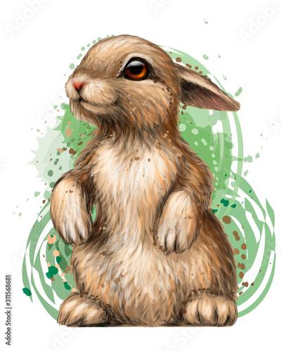 Fotografia, Obraz Rabbit