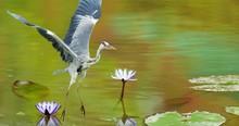 Birds Beautiful 4k Wallpaper Pics