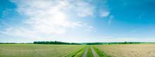 Panorama Of Summer Green Field...
