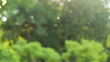 Beautiful Abstract Nature Bokeh Background Of Blurry Sunset Landscape And Defocused Round Particles Of Poplar Pollen Flying All Around Air In Evening. Real Time Full Hd Video Footage.