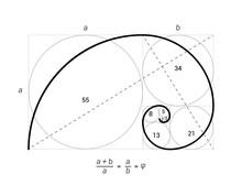 Golden Ratio Vector Proportion...