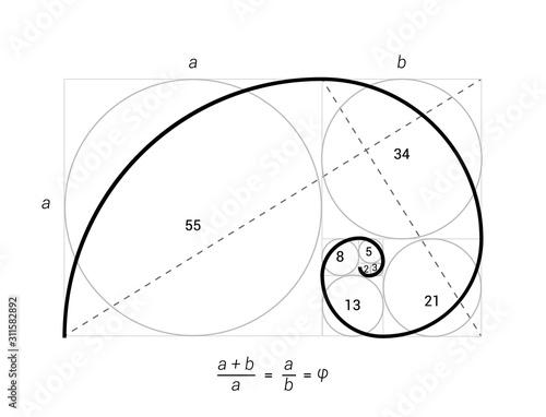 Golden ratio vector proportion spiral section Fotobehang