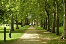 Promenade Ombragée Entre Deux Ranger D'arbre Au Domaine Du Château Coloma à Sint-Pieter-Leeuw