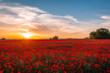 pole maków, zachód słońca, polska, małopolska