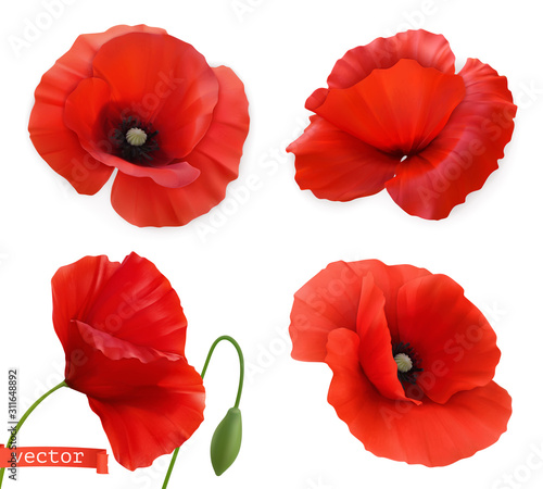 Red poppies. Papaver flowers 3d realistic vector icon set - 311648892