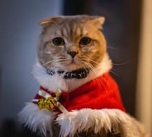 Cute Cat Christmas Season  Holidays And Celebration New Year Christmas Lights