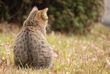 屋外野良猫背中右スペース
