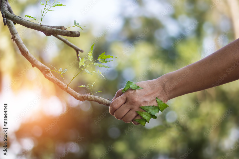 Fototapeta Human handshake with a nature, earth day, human stay together with nature, environment and ecology concept.