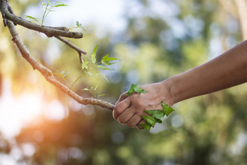 Human handshake with a nature, earth day, human stay together with nature, environment and ecology concept.