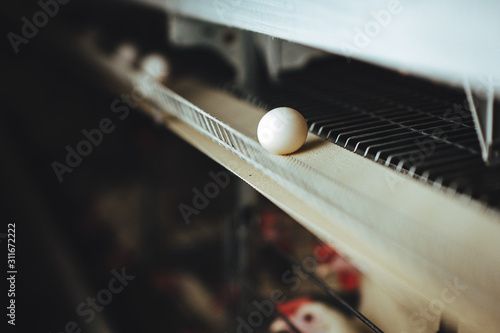 Obraz egg factory plant agriculture poultry chicken farm - fototapety do salonu