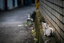 Little Stray Cat Sit At A Street