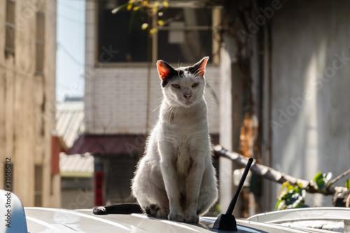 Photo  wild aggressive black and white cat