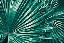 Tropical Foliage, Big Palm Lea...