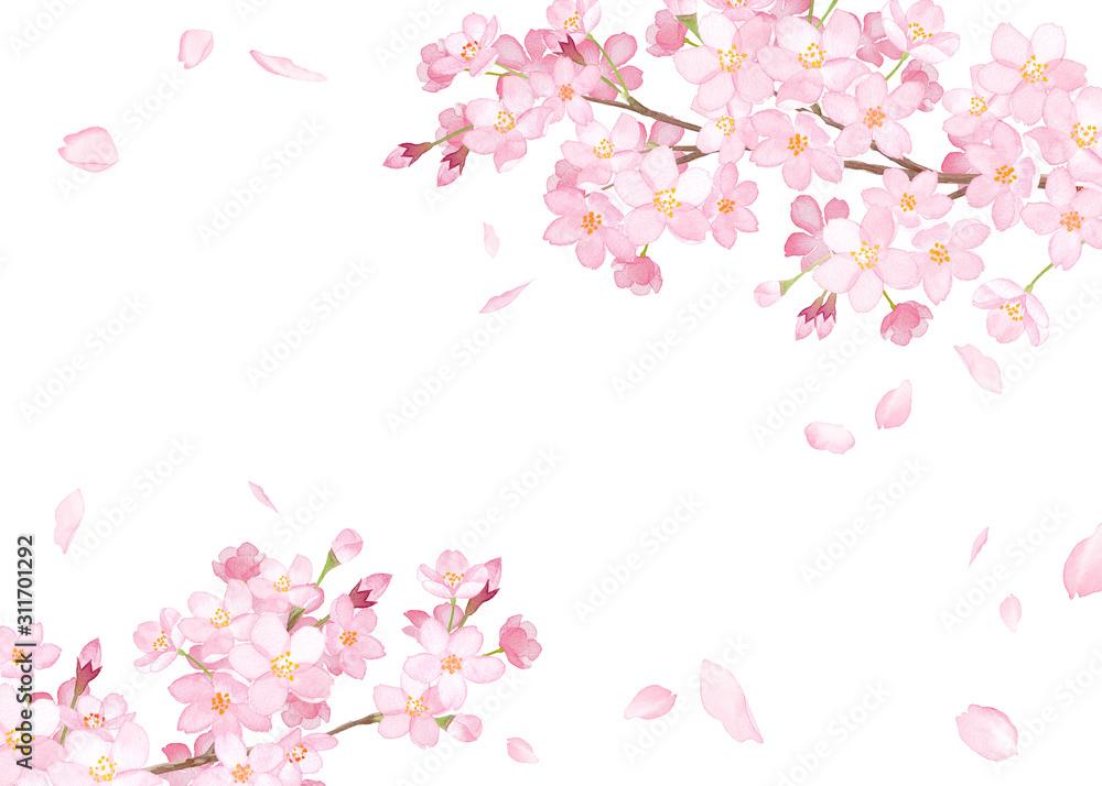 Fototapeta 春の花:さくらと散る花びらのフレーム 水彩イラスト