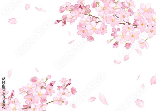Obraz 春の花:さくらと散る花びらのフレーム 水彩イラスト - fototapety do salonu