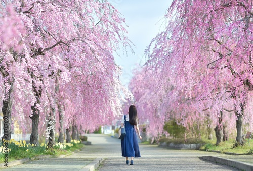春・桜・女性 Wallpaper Mural