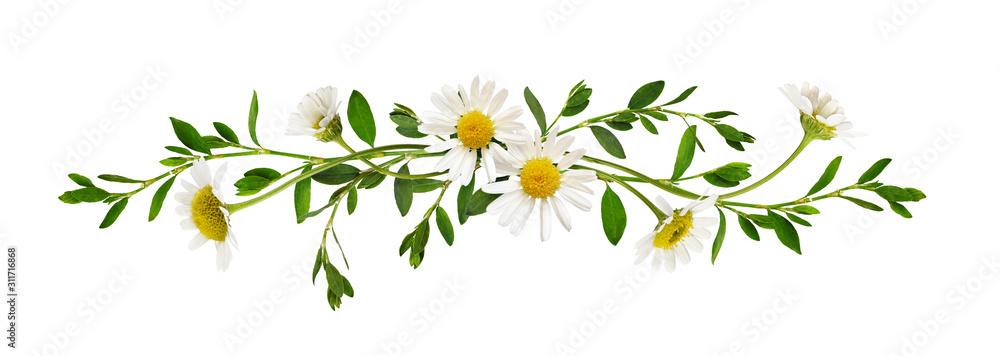 Fototapeta Daisy flowers green grass in a line arrangement
