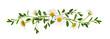 Daisy flowers green grass in a line arrangement