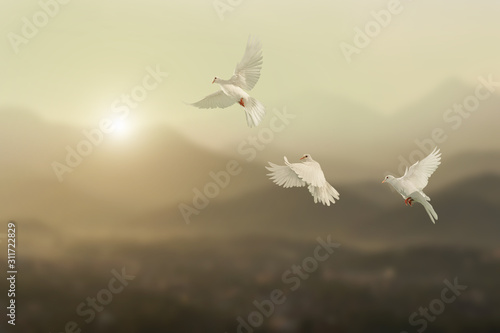 Foto En Lienzo - White pigeons fly to sky in beautiful light sunset on mountain background.freedom concept and international day of peace