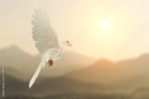 Foto En Lienzo - White Dove flying on Mountain vintage pastel background and beautiful light in international day of peace concept