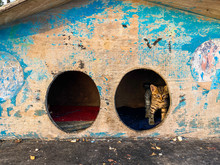 Street House For Homeless Cats...