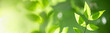 Close up of nature view green leaf on blurred greenery background under sunlight with bokeh and copy space using as background natural plants landscape, ecology cover concept.