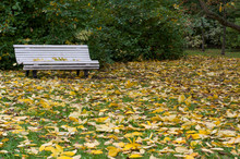 White Wooden Bench In An Autumn Park. Yellow Fallen Leaves On A Green Lawn.
