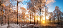 Panoramic Winter Landscape At Sunset, With Vibrant Blue Sky And Gold Rays Of Light Illuminating The Snow Covered Trees