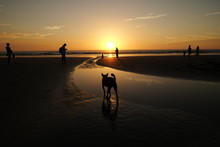 Sunset Over The Pacific In Guanacaste Costa Rica With A Dog Wading Through The Tide Pool In The Foreground