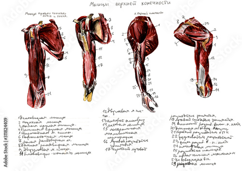 Set of anatomy human muscles and bones Canvas Print