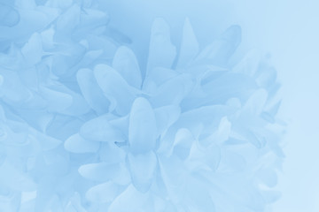 Beautiful abstract color purple and blue flowers on white background and light blue flower frame and purple leaves texture, blue background