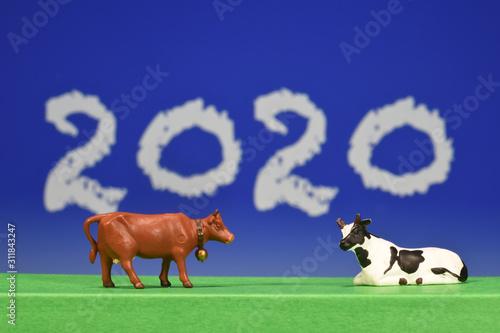Fényképezés 2020 agriculture agricole environnement elevage vache bovin