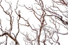 Branches Of Tree On Background Of Blue Sky