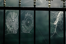 Halloween, Horror, Suspense. Moonlight. Spider Web In Dew Drops On The Fence Of A Cemetery Or Grave.