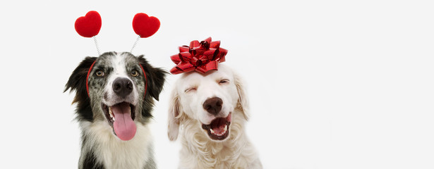 Fototapetatwo happy dog present for valentine's day with a red ribbon on head and a heart shape diadem. isolated against white background.
