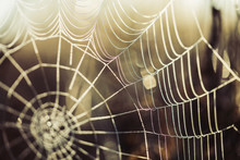 Spider Web Covered By Morning ...