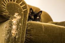 Stuffed Chair Scratched By Cat...