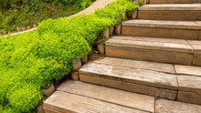 Fresh Greenery Foliage Of Needle-like Leaves Of Sedum Angelina Plant Or Stonecrop Spreading Beside The Wooden Stair