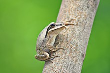 A Frog Sitting On A Tree Is Lo...
