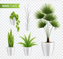 House Plants In Pot Realistic ...