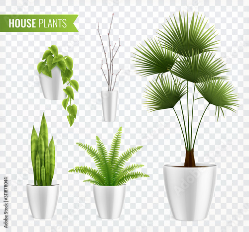 Obraz House Plants In Pot Realistic Icon Set - fototapety do salonu