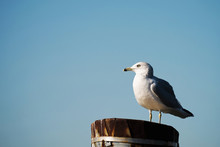 A Seagull Stands On Top Of A M...