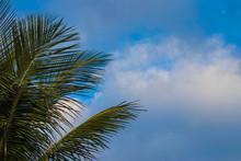 Palm Trees Against Blue Sky