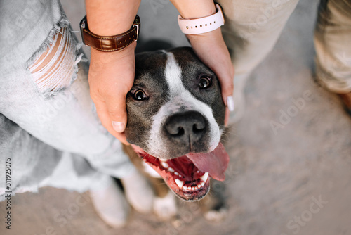 pit bull terrier dog portrait between owners, top view Fototapete