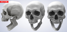 Detailed Graphic Photorealistic Black And White Smiling Human Skulls. On Gray Background. Vector Icon Set. Side And Front View.