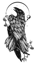 Hand Drawn Illustration With A Raven Or Crow. Tattoo Stencil Style. Gothic Drawing With A Bird And Dry Branch Of Berries.